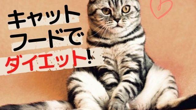 猫は餌でダイエットできる?