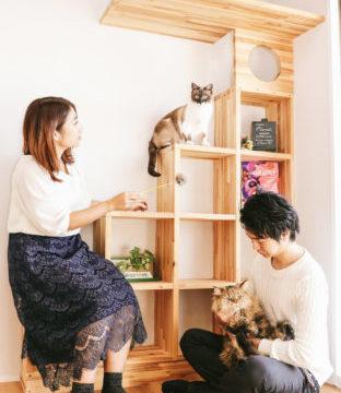 猫と暮らし