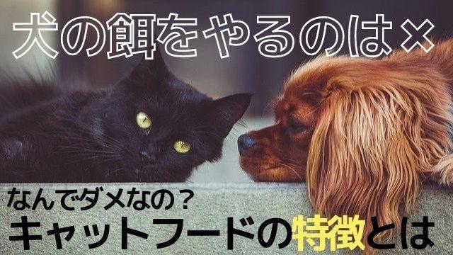 犬の餌はダメ!
