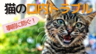 猫の口内トラブル