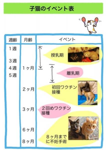 子猫にミルクをいつまで与えるかわかる記事の画像
