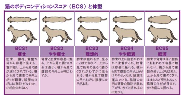 猫のエサの回数を書いている記事の画像