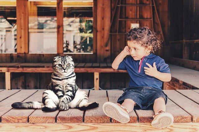 先住猫の威嚇がいつまで続くか説明する記事の画像