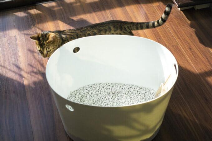猫が猫砂を食べる記事の画像