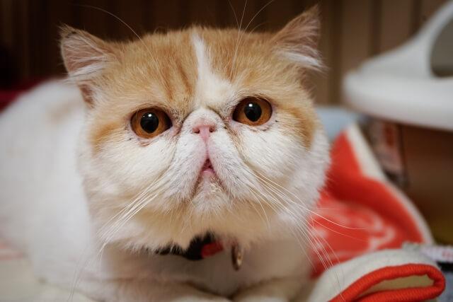 猫の汗の記事の画像