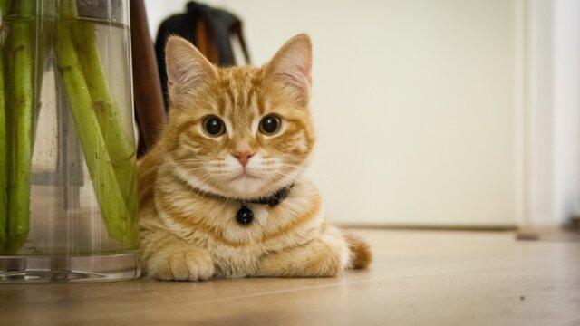 猫がこちらを見ている画像