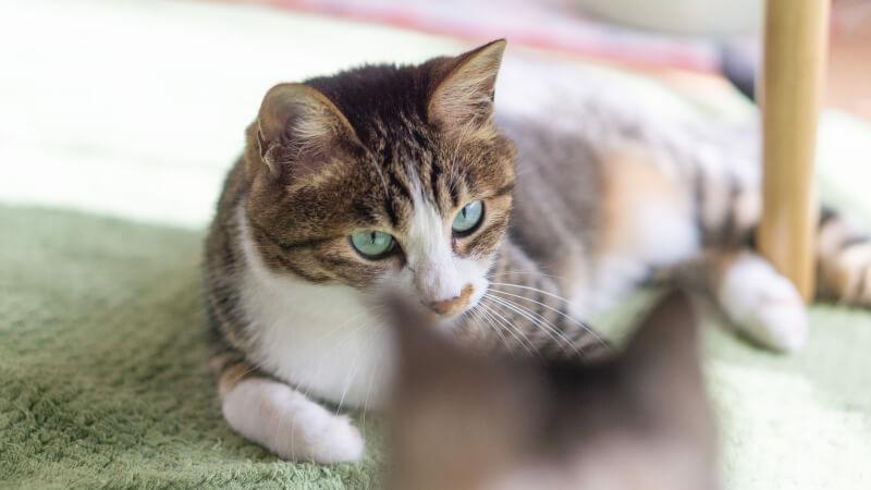 猫と床との関係性を表す記事の画像