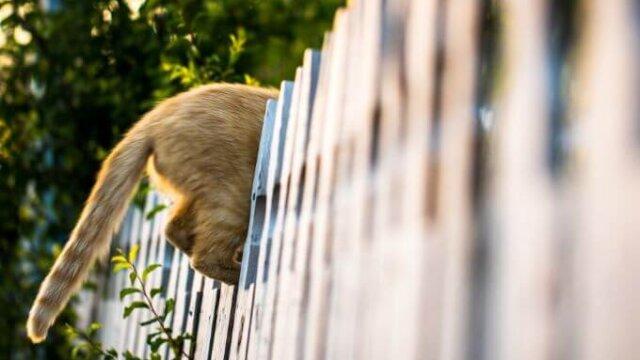 猫の脱走が心配の記事の画像