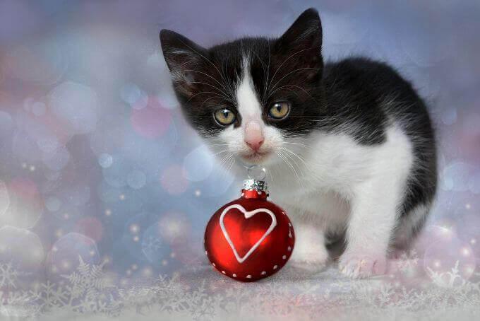 猫の脱走が心配な人に書いた記事の画像MYPETLIFE